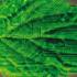 人造光合作用清洁能源(中国新能源汽车CNNEVS)